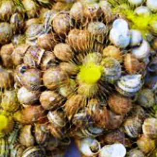 Siatki na ślimaki