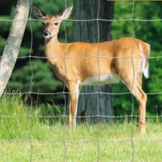 Siatki na jelenie i dziki